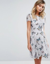 Oasis Butterfly Lace Dress - Multi