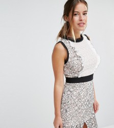 True Decadence Petite Scallop Lace Mini Pencil Dress - Multi